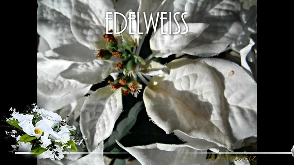 Edelweiss by Sal (Dec 22nd 2014) http://youtu.be/Nbx47eTgN7A http://smu.gs/1xcADOU